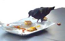 essender Vogel