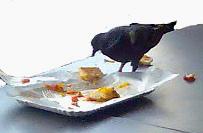 fressender Vogel