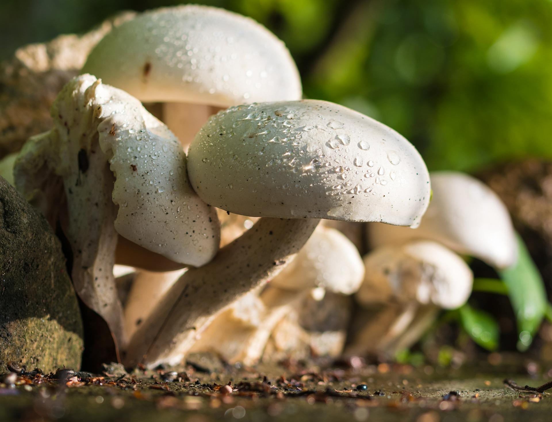 Bild für Pilze: klein, aber oho!