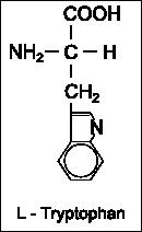 Strukturformel L-Tryptophan