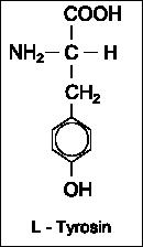 Strukturformel L-Tyrosin