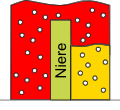 Bild hohe Mengen Zucker im Urin