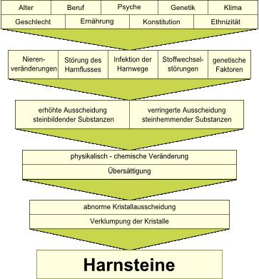 Schema Harnsteinbildung